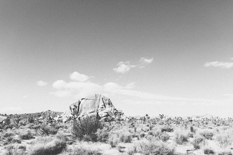 joshua tree black and white photography photo