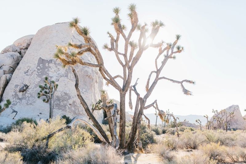 photography by paulina joshua tree engagement photography session photo_0185